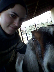 goats (1)