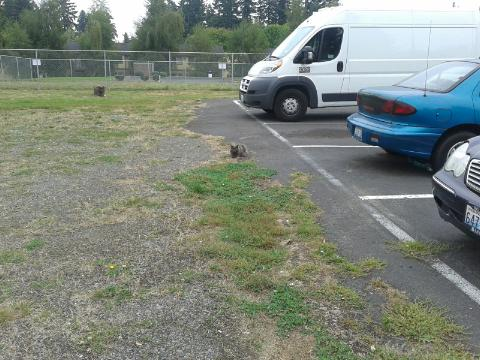 cats in the lot
