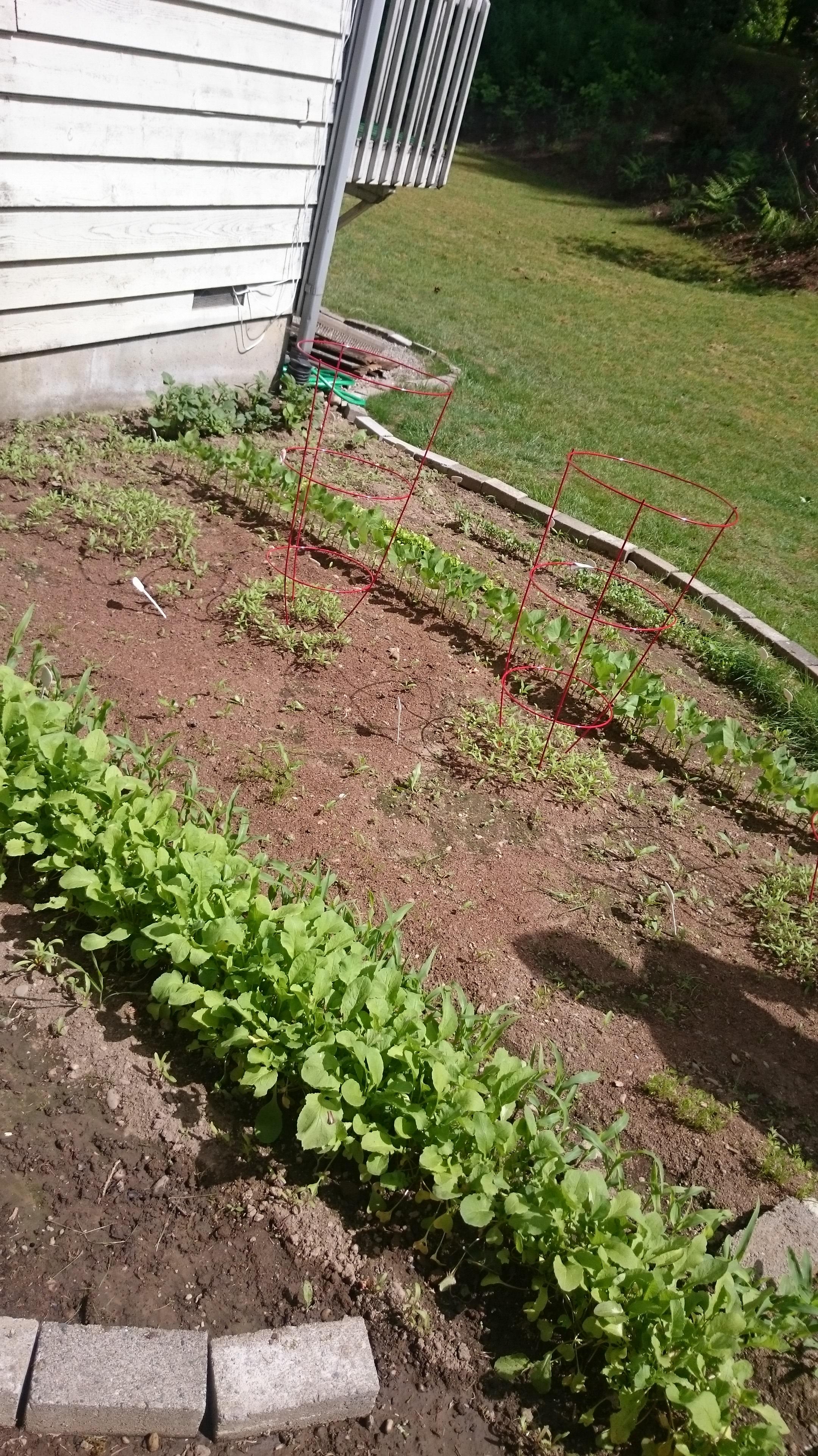Garden   Rachel Author Barnard