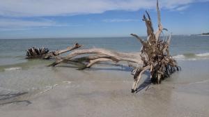 20160120_TreeBeach_Sarasota_FL (20)