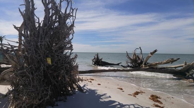 20160120_TreeBeach_Sarasota_FL (22)