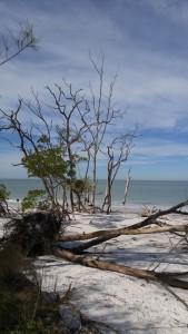 20160120_TreeBeach_Sarasota_FL (31)