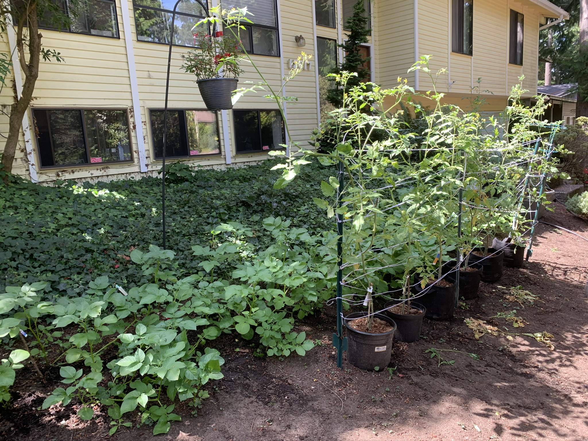 DIY Garden 2020 - Partial Shade PNW Zone 8b/9a - 3 Months ...